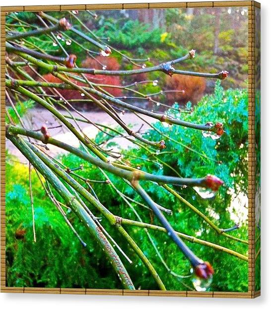 Wet Canvas Print - A Delicate Balance by Anna Porter