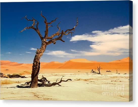 A Desert Story Canvas Print