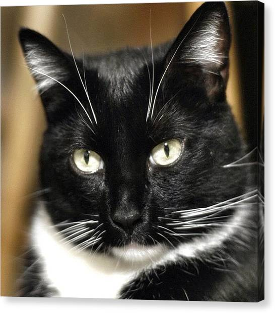 Tuxedo Canvas Print - A Dignified-looking Mr. Tully by Couvegal Brennan