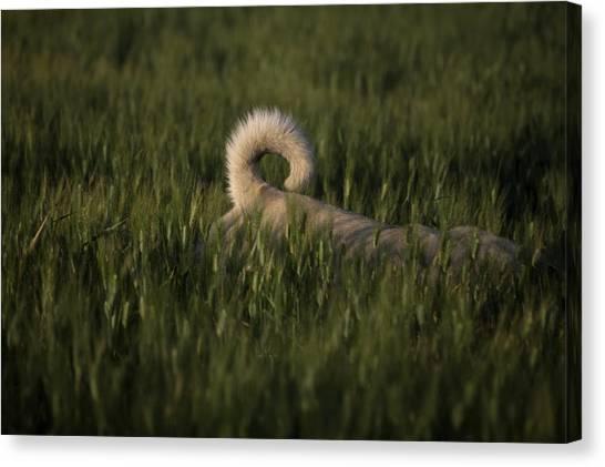 Prado Canvas Print - A Dog Walks Through A Wheat Field by Chico Sanchez