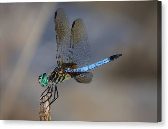 A Dragonfly Iv Canvas Print