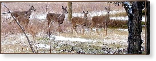 A Dusting On The Deer Canvas Print