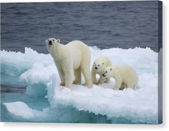 Polar Bears Canvas Print - A Family by Vadim Balakin