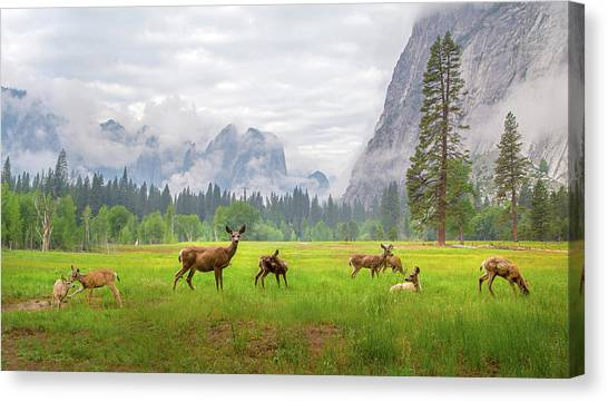 Yosemite Canvas Print - A Feeling Of Ancient Time by Dianne Mao