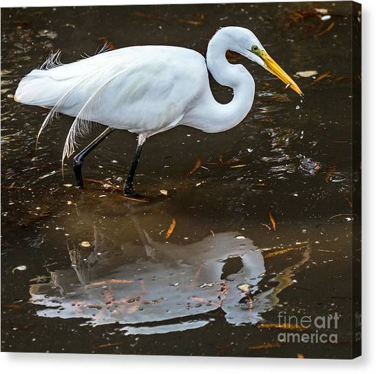 Canvas Print featuring the photograph A Fine Catch by Kate Brown