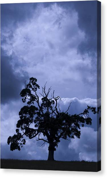 A Flash Of Blue Tree Canvas Print