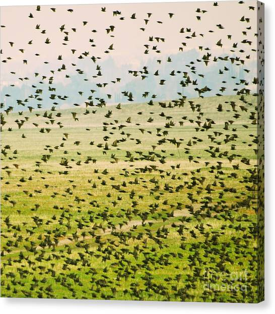 A Flock Of Freedom Canvas Print