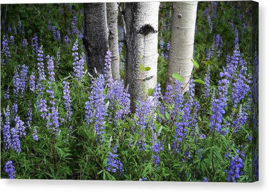 A Forest Of Blue Canvas Print