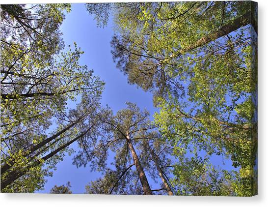 A Forest Sky Canvas Print