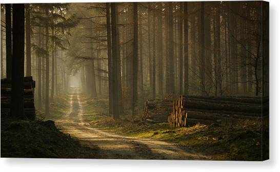Fir Trees Canvas Print - A Forest Walk by Jan Paul Kraaij