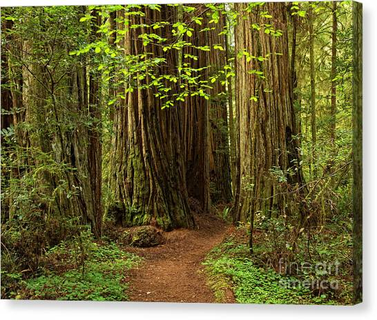 A Forest Welcome Canvas Print