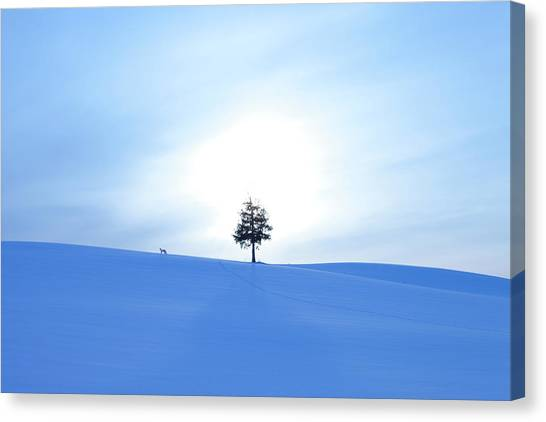 A Fox And A Tree In Snow Field Canvas Print by Ichiro