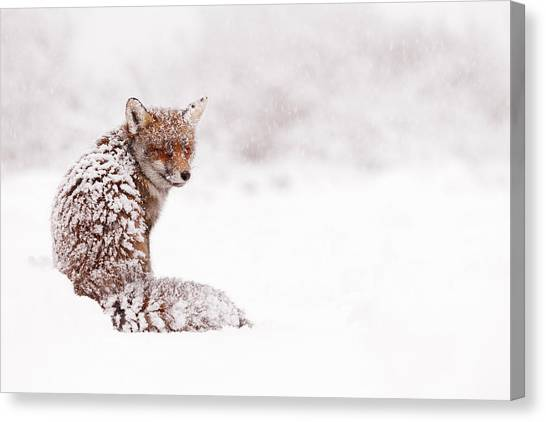 Snow Canvas Print - A Red Fox Fantasy by Roeselien Raimond