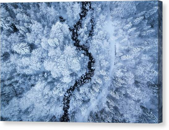 Frost Canvas Print - A Freezing Cold Beauty by Daniel Fleischhacker