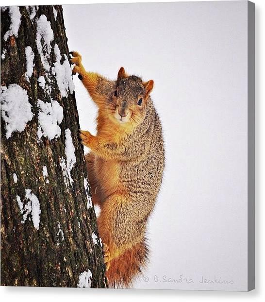 Squirrels Canvas Print - A Friendly Lil Fella  #instago by B Jenkins