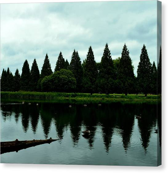A Gaggle Of Pines Canvas Print