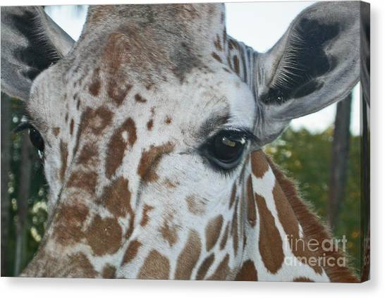 A Giraffe In Close Up Canvas Print