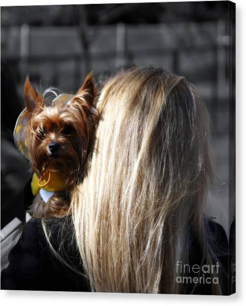 A Girl And Her Dog Canvas Print by Steven Digman