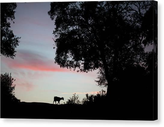 The Prado Canvas Print - A Goat Crosses A Dirt Road In Prado Del by Chico Sanchez