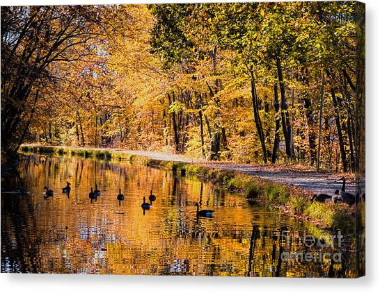 A Golden Afternoon Canvas Print