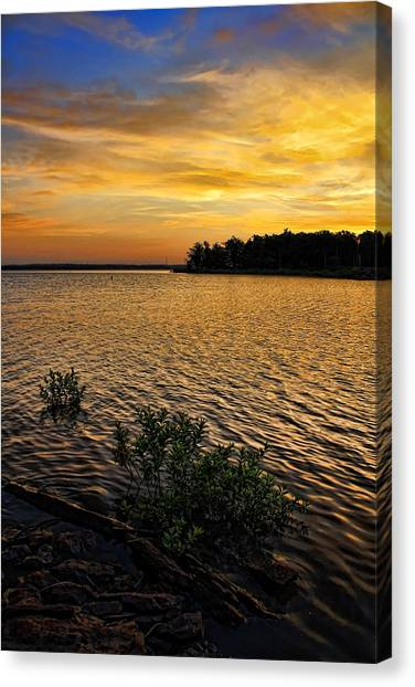 A Golden Morning From 2011 Canvas Print by Carolyn Fletcher