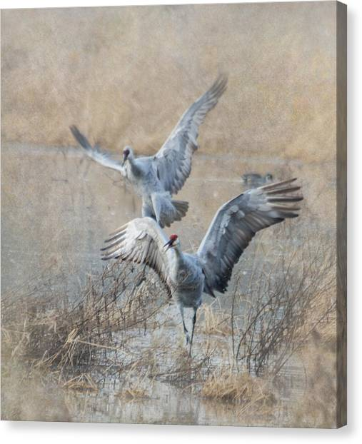 Cranes Canvas Print - A Grand Entrance by Angie Vogel