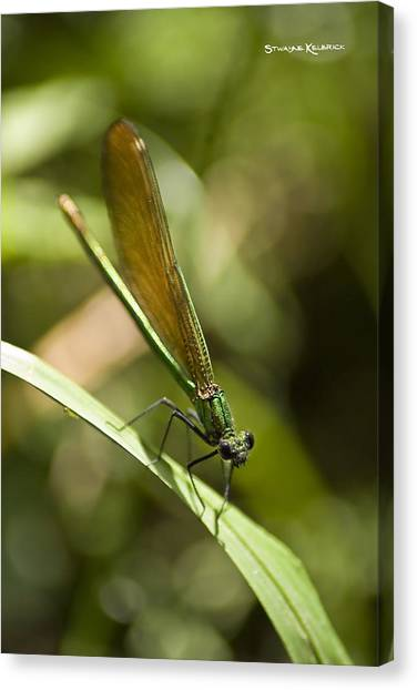 Canvas Print featuring the photograph A Green Dragonfly by Stwayne Keubrick