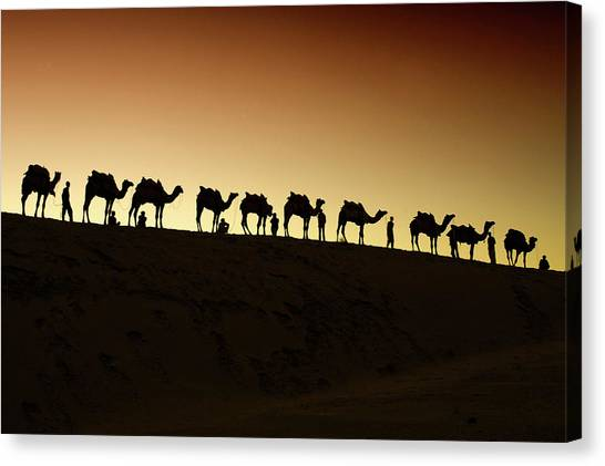 Thar Desert Canvas Print - A Group Of Camel Herders by Piper Mackay