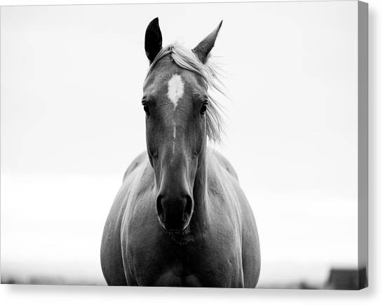 A Horse In A Field Canvas Print by Jordan Siemens