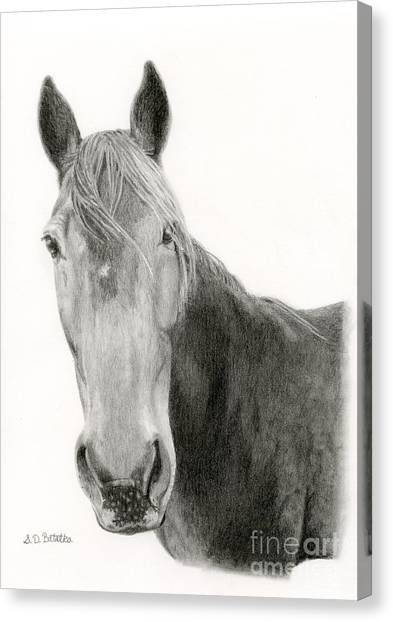 Lassos Canvas Print - A Horse Of Course by Sarah Batalka
