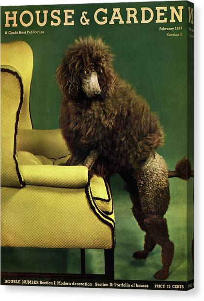 A House And Garden Cover Of A Poodle Canvas Print
