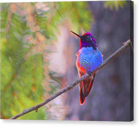 A Hummingbird Resting In The Evening Light. Canvas Print