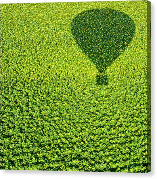 Hot Air Balloons Canvas Print - A Hundred Million Suns by Avi Revivo