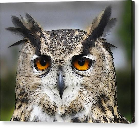 A Knowing Look Canvas Print