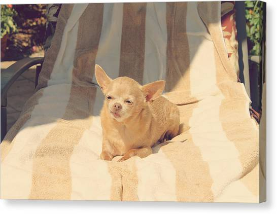 Chihuahuas Canvas Print - A Life Of Leisure by Laurie Search