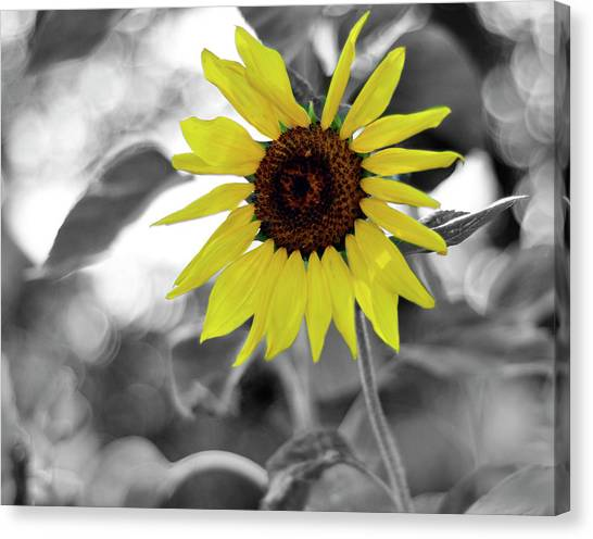 'a Little Color In Your Day' Canvas Print