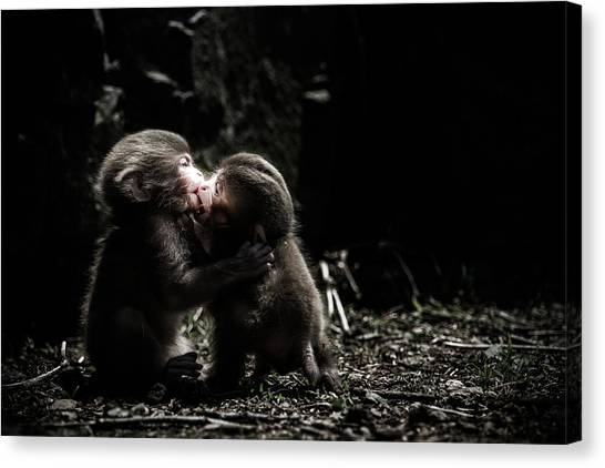 Monkeys Canvas Print - A Little Love Story by Takeshi Marumoto