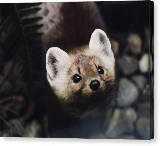 A Little Martin Looking Up At Me. Canvas Print
