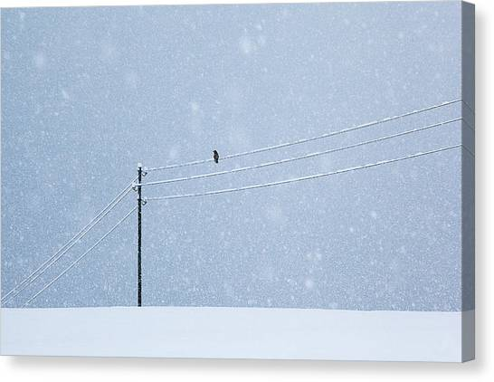 Ravens Canvas Print - A Long Day In Winter by Uschi Hermann