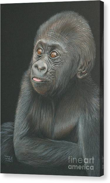 Canvas Print - A Look Of Wonder - Baby Gorilla by Jill Parry