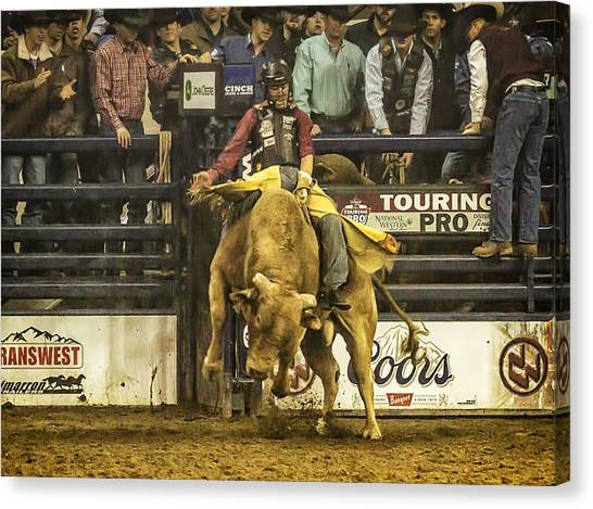 A Lot Of Bull At The National Stock Show Canvas Print