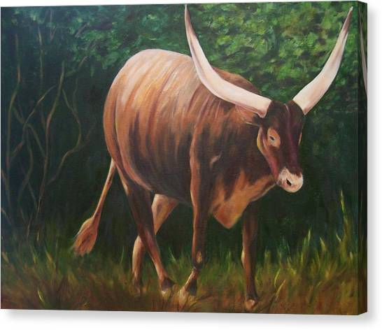 A Lot Of Bull, Watusi  Canvas Print