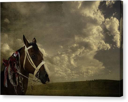 A Lovely Horse Canvas Print