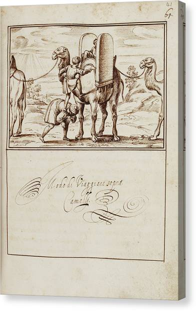 Pilgrims Canvas Print - A Man Climbing To Sit On A Camel by British Library
