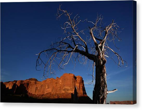 Canvas Print - A Mesquite Trees And Buttes by Raul Touzon