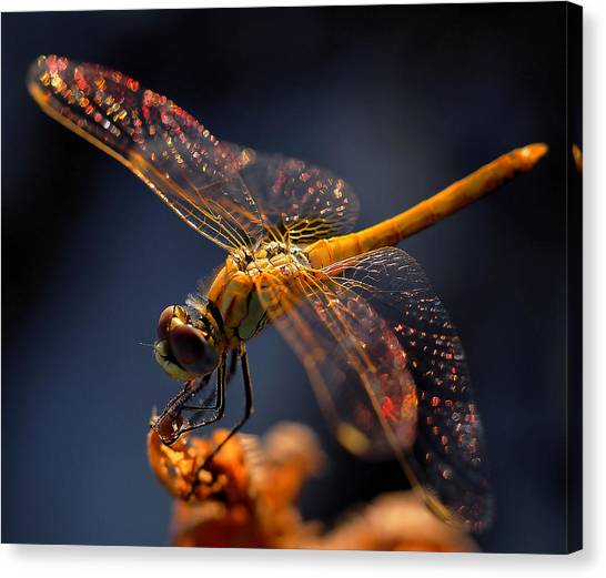 Bug Canvas Print - A Midsummer Night's Dream... by Thierry Dufour