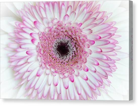 A Million Petals Canvas Print