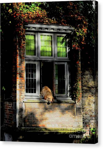 A Nap In The Sun Canvas Print