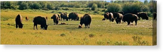 A New Beginning Grand Teton National Park Canvas Print