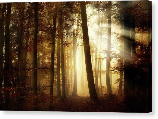 A New Day Canvas Print by Norbert Maier